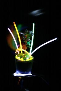 Fluorescence                                Eugéne Dengo-Adoum